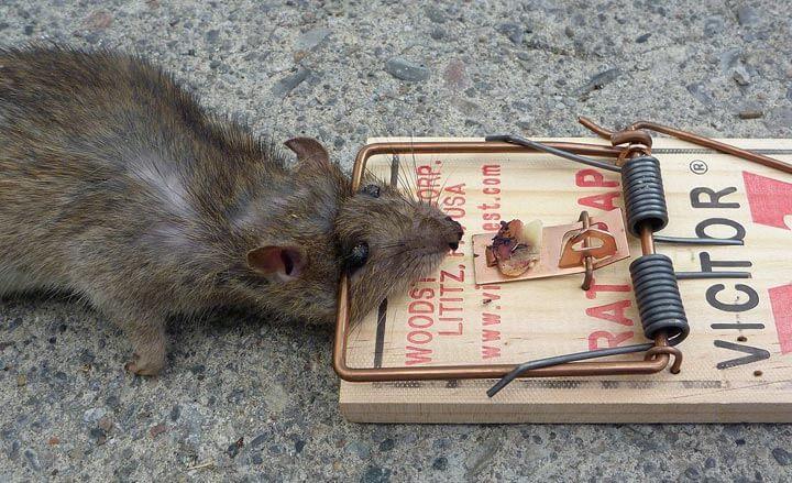 Надежная защита от мышей своими руками.